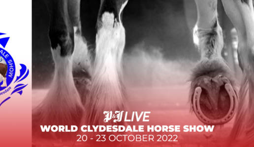 CLYDESDALE HORSE SHOW 2